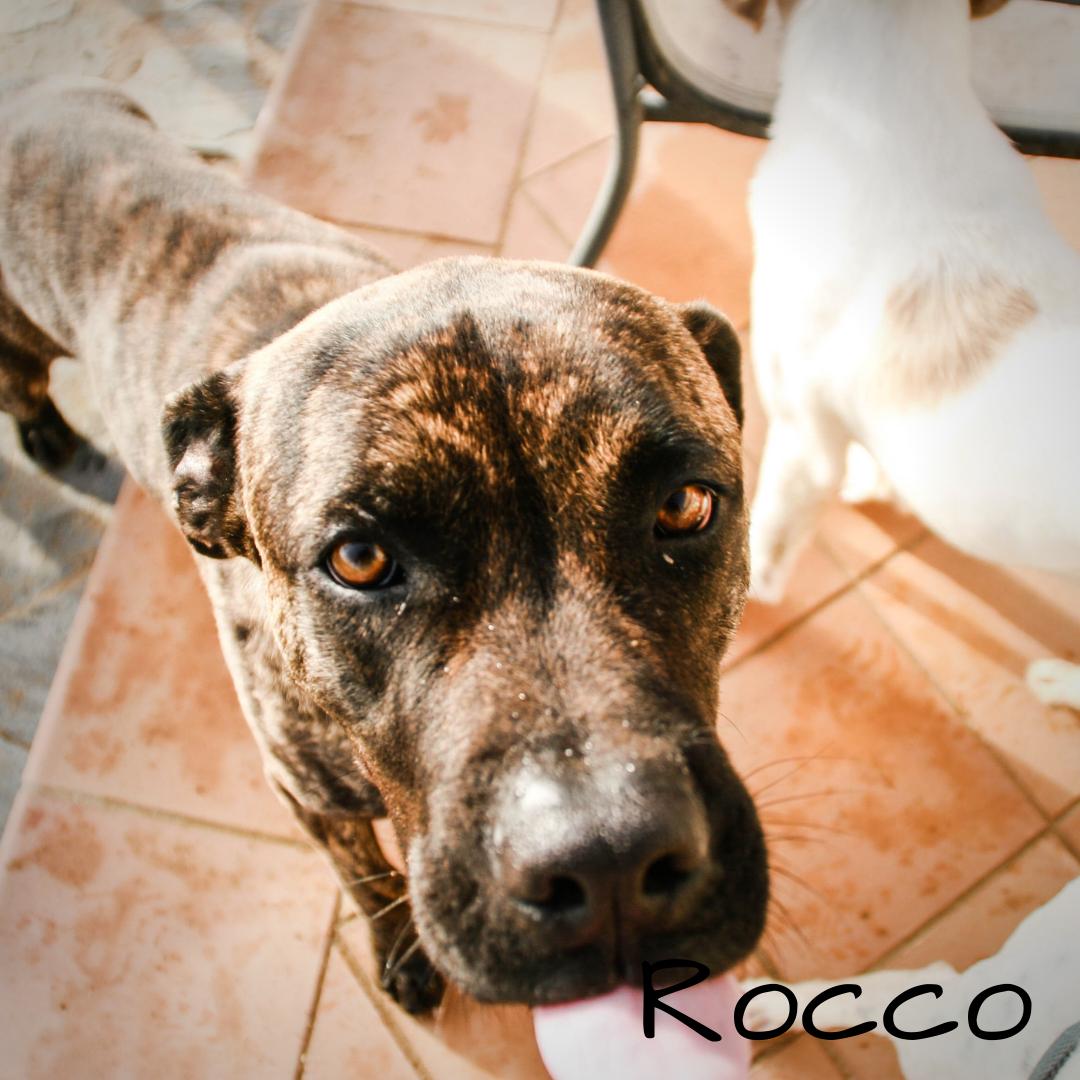 Rocco ✝