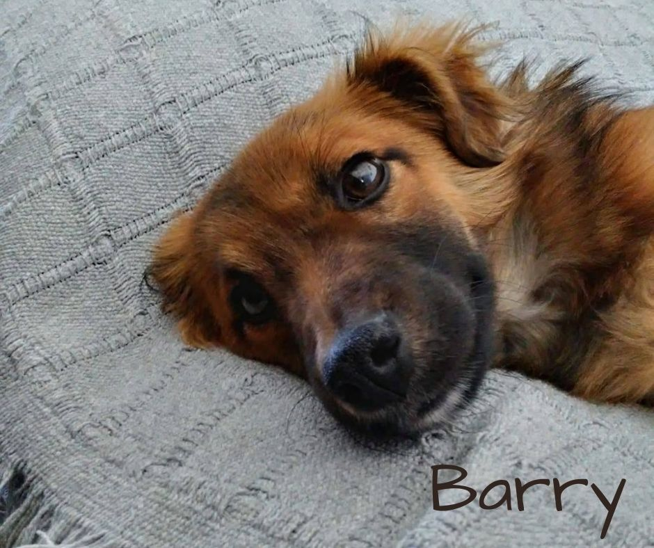 RESERVED! Barry