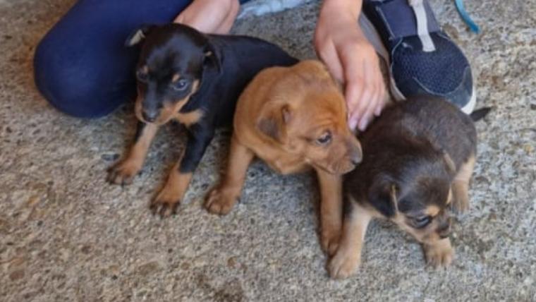 Pups of Elin